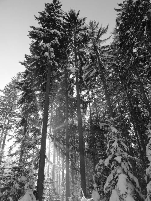 Waldlichtung ii